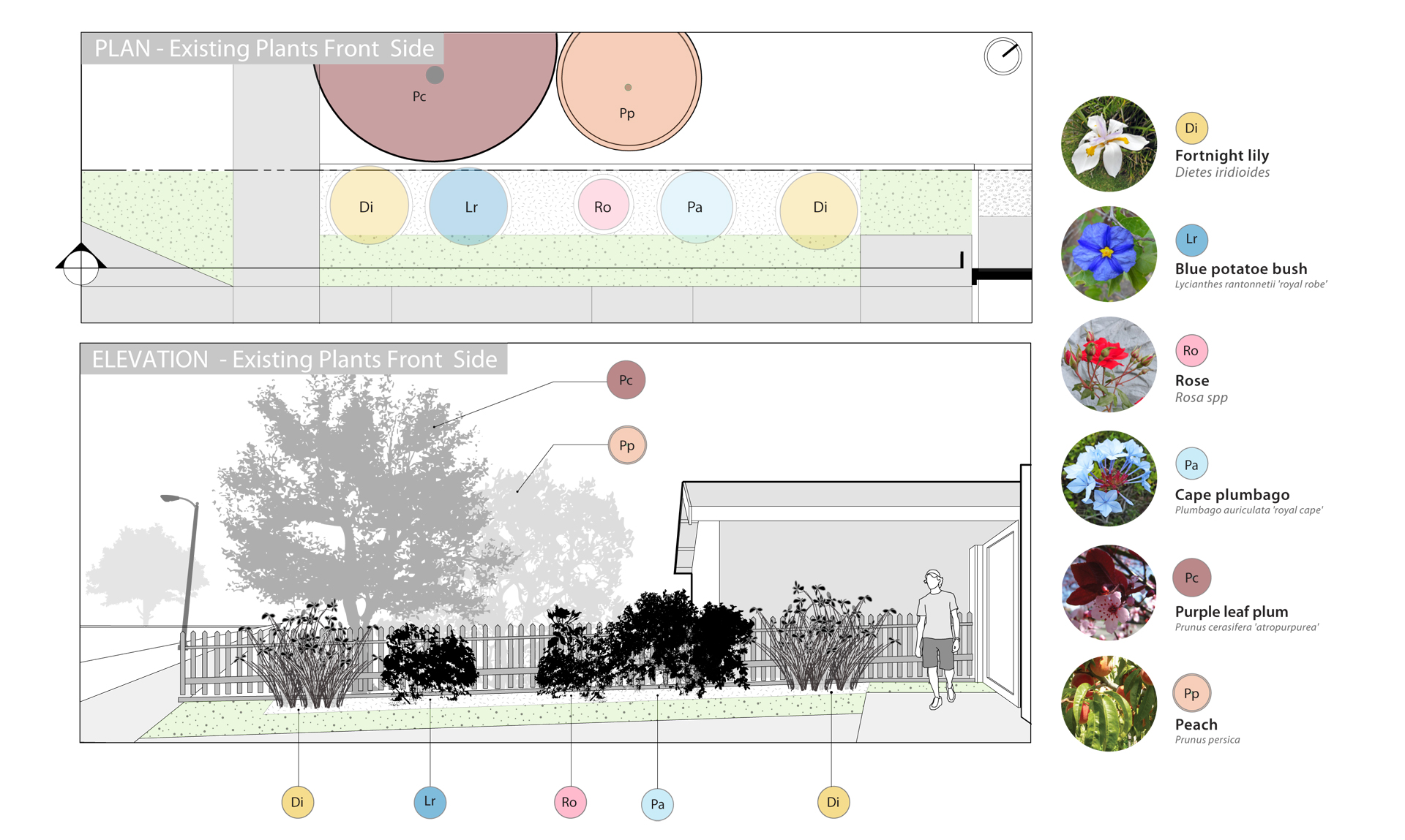 Elevation And Plan Of Trees : Residential landscape design illustrative details
